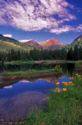 Wild About Wildflowers In Crested Butte, Co