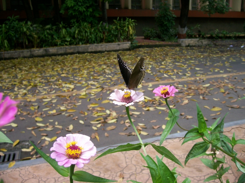 Beauty Of Plants And Butterfly!