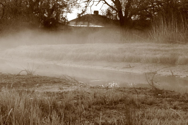Veil Of Morning Mist (8869bwg Sepia)