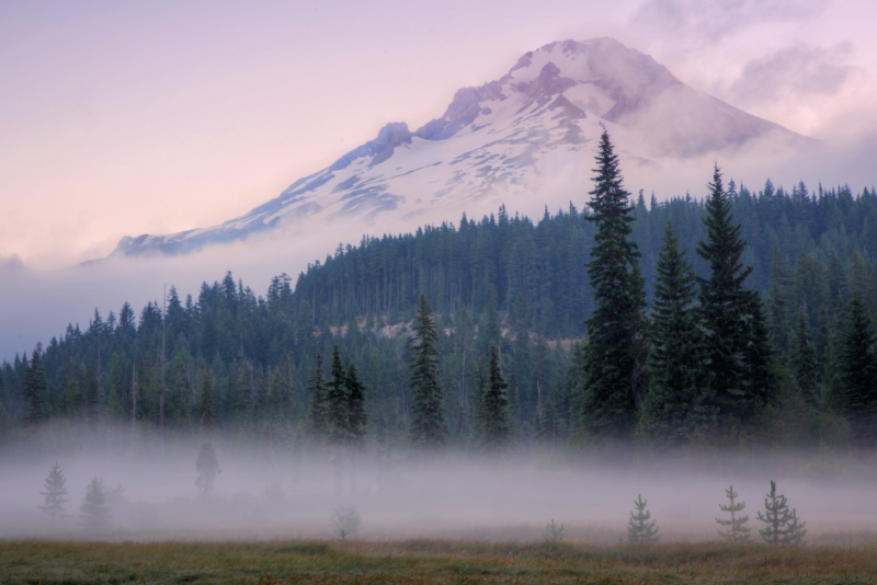 Misty Morning Mount Hood Meadow