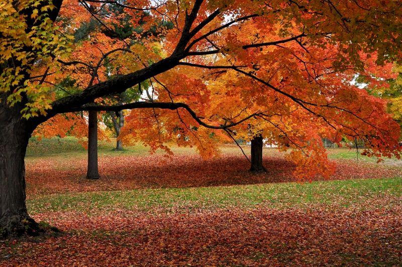 Autumn Colors Of New England