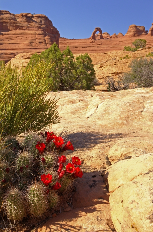 Claret Cup And Delicate Arch