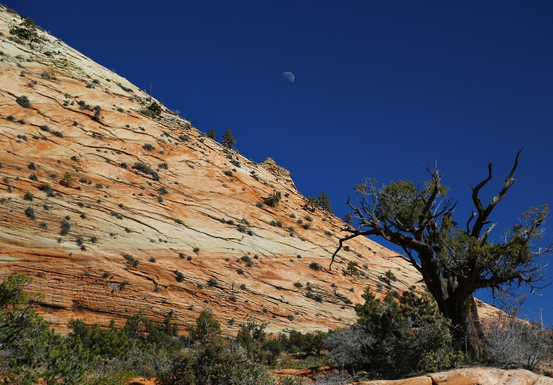 Zion – Moon Along The Slope