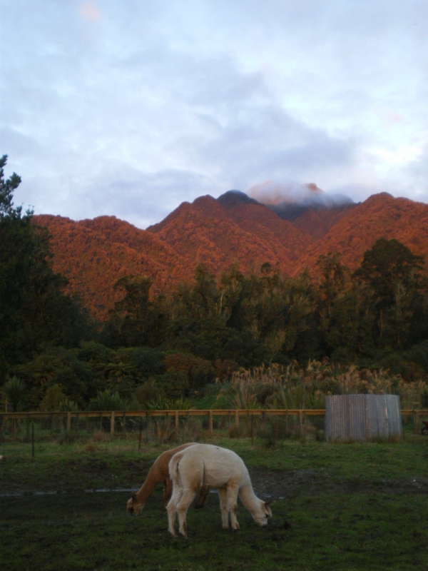 Lama At Sunrise
