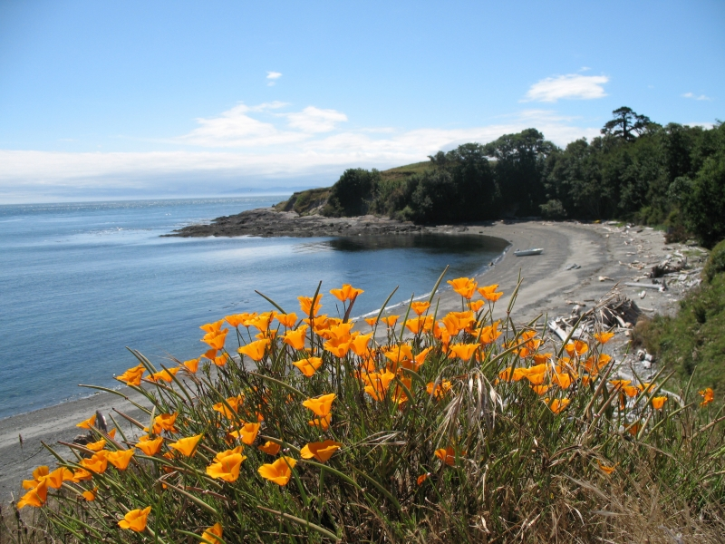 Flowers And Sand In The San Juan Islands