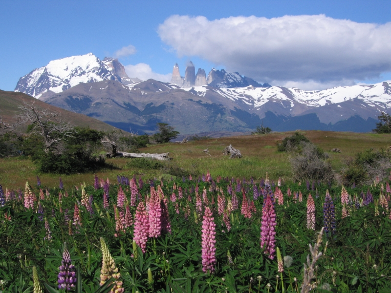 The Three Towers Of Patagonia