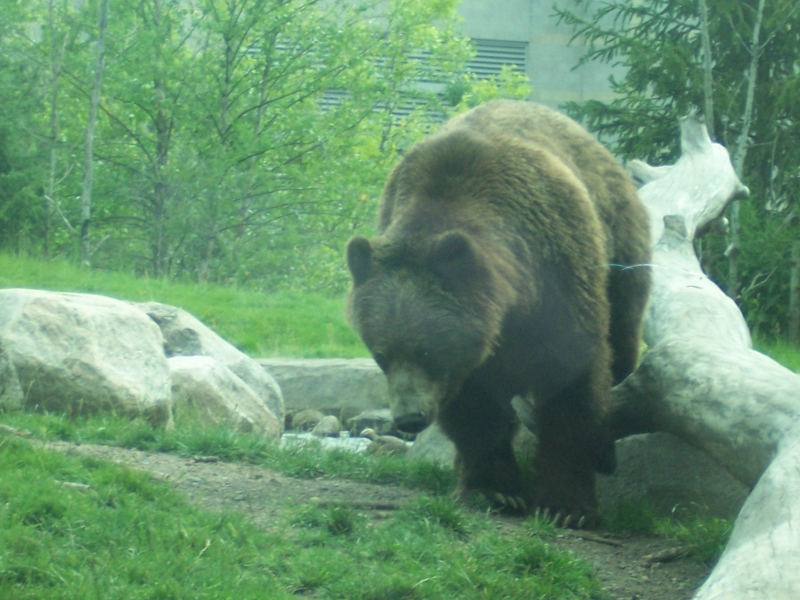 Upclose To The Bears
