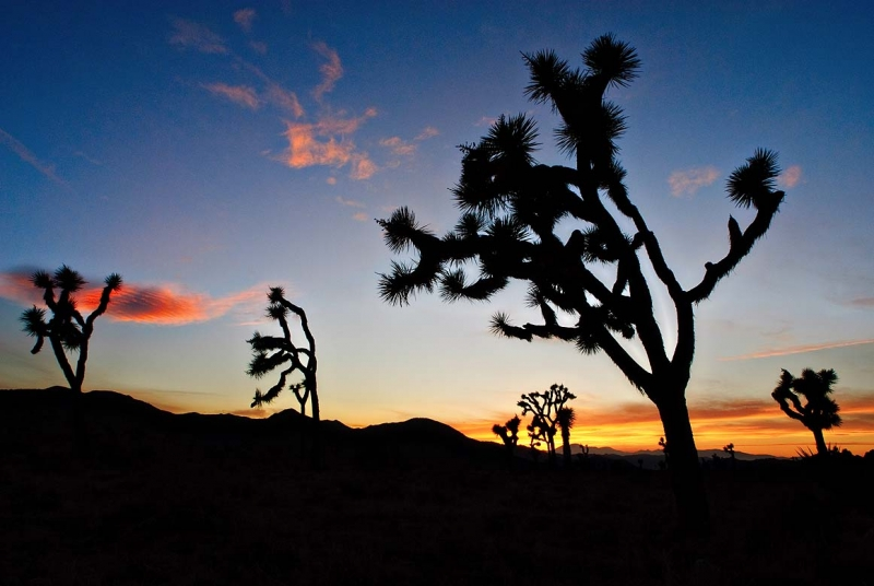 Fading Light At Joshua Tree National Park