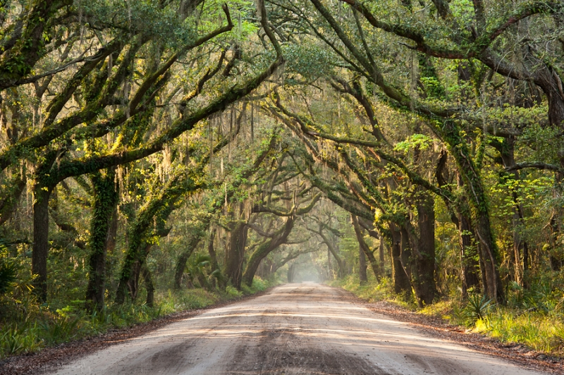 Southern Tree-lined Dirt Road