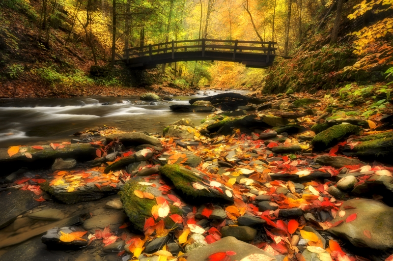 Wooden Bridge And Fall Colors