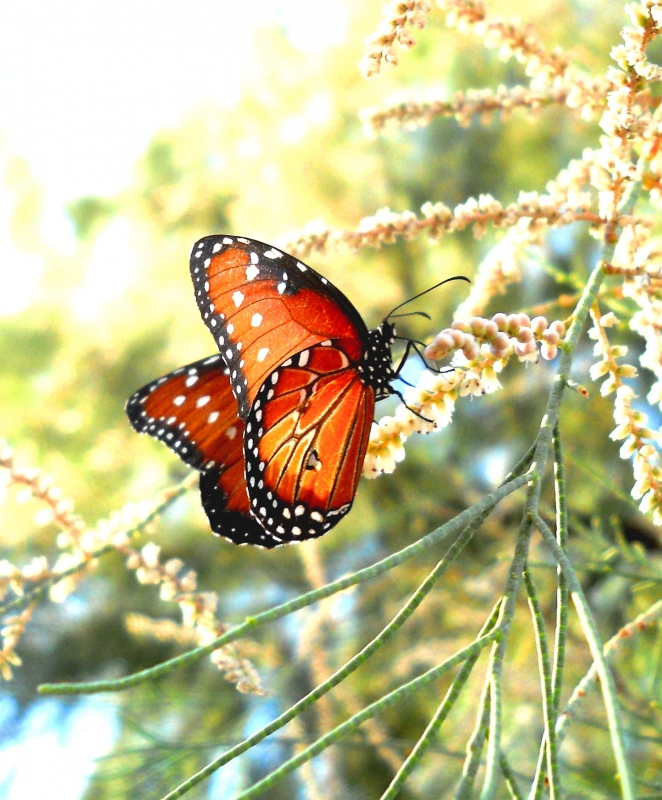 Closeup Of A Butterfly In Tree