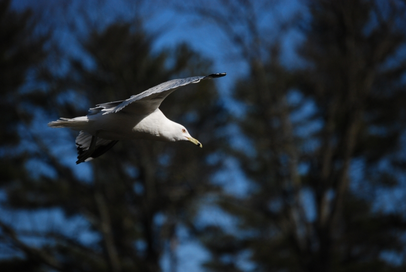 In Flight At Hubbard Park