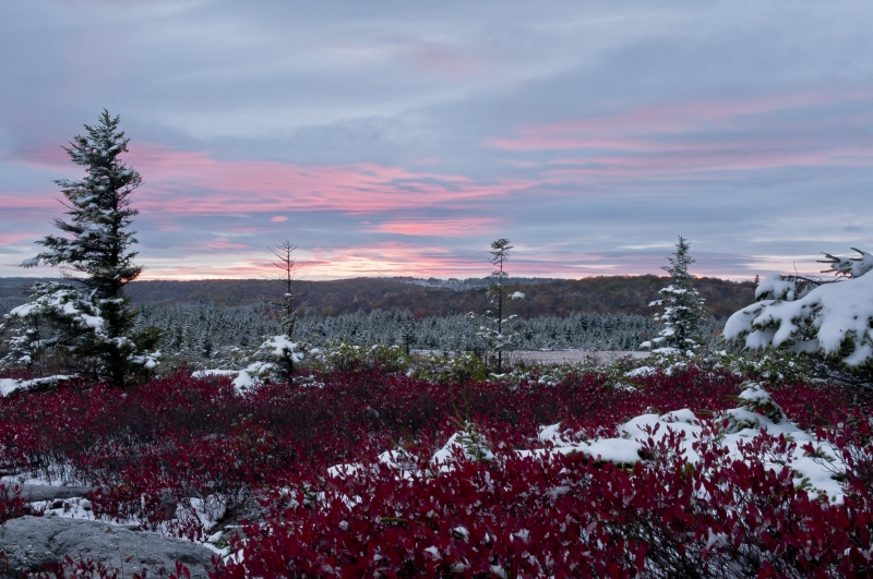 Dolly Sods Sunset And Snow