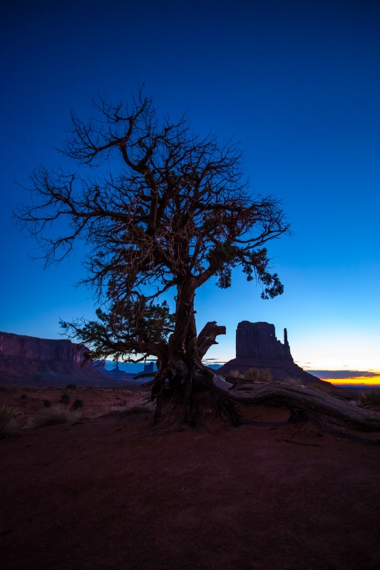 Dying Tree Silhouette And West Mitten Butte
