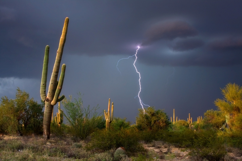 Monsoon In The Desert
