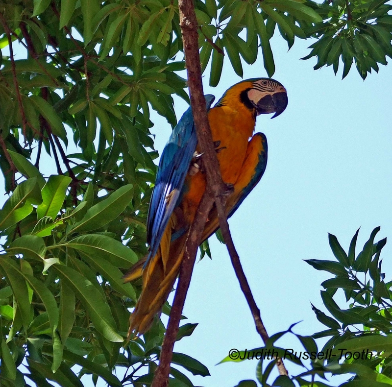 Colorful Macow In Tree