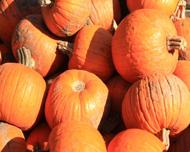 Pumpkins In A Barrel