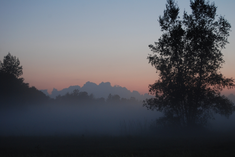 Fog After Sundown