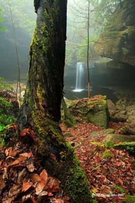 Dog Slaughter Falls, Daniel Boone National Forest