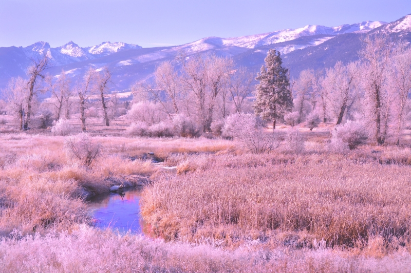 Frosty Morning In The Bitterroot Valley