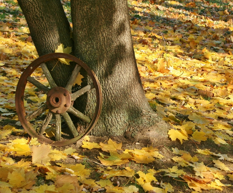 Wheel Against Tree In The Fallen Leaves