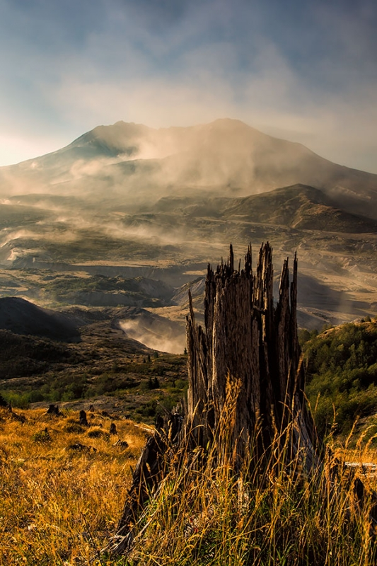 Tree Stump And Ash Storm, Mt. St. Helens