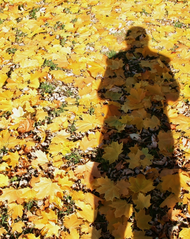 Shadow In The Leaves