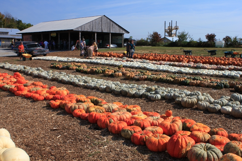 Tennessee Pumpkin Patch