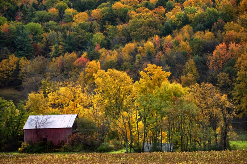 Small Red Barn And Fall Colors