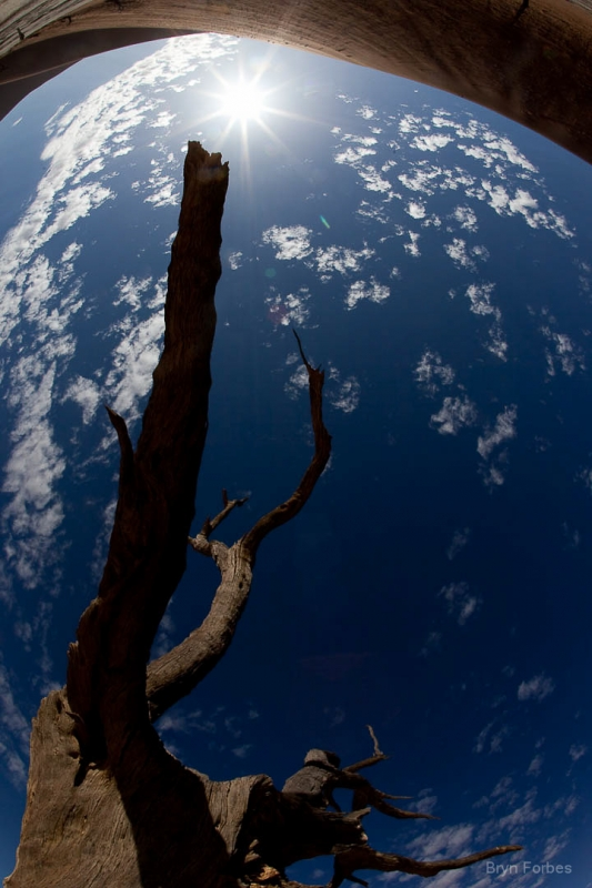 Tree In Orbit