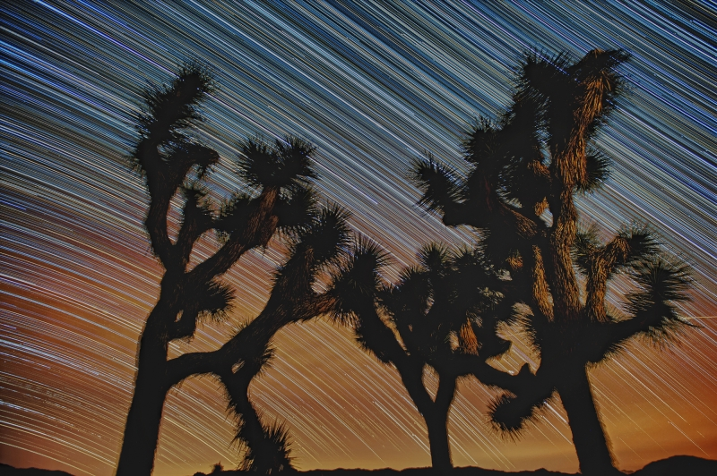 Star Trails In Ryan Campground, Joshua Tree