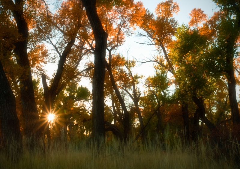 Cottonwoods At Sunset – Two Moon Park