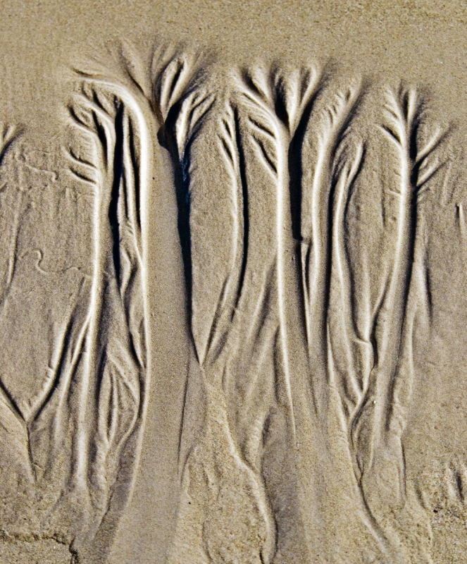 Ghost Trees In The Sand