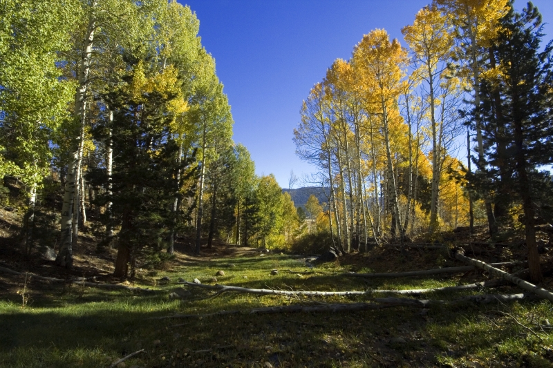 Hope Valley Aspen Meadow