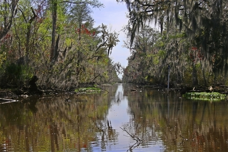 Louisiana Swamp