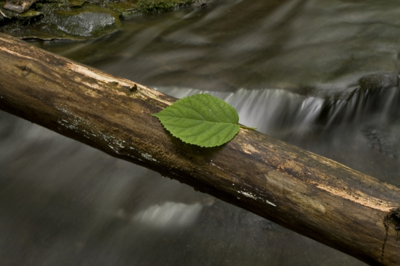 Leaf Over The Water