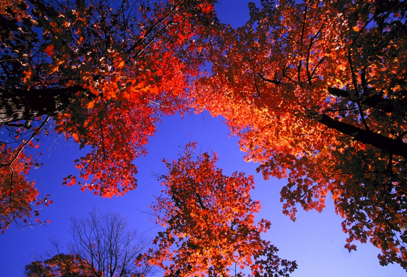 River Of Sky Amid Autumn Maple Leaves