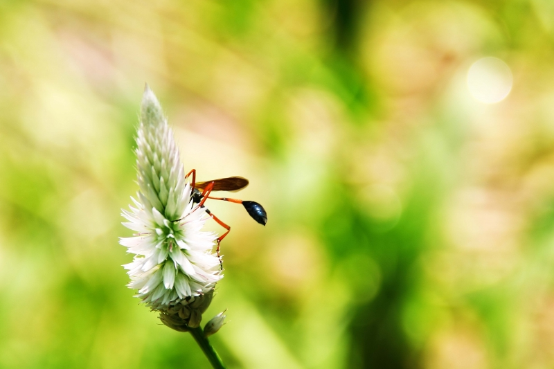 Flower Love Insect