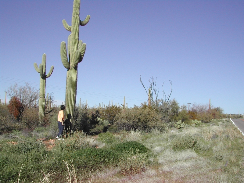 The Cactus People