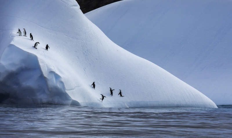 Penguin Reprieve On Iceberg