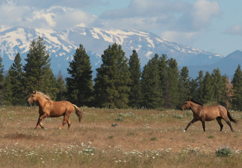 Warmsprings Wild Horses