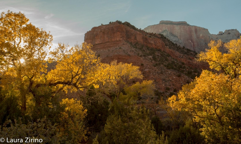 Zion Light