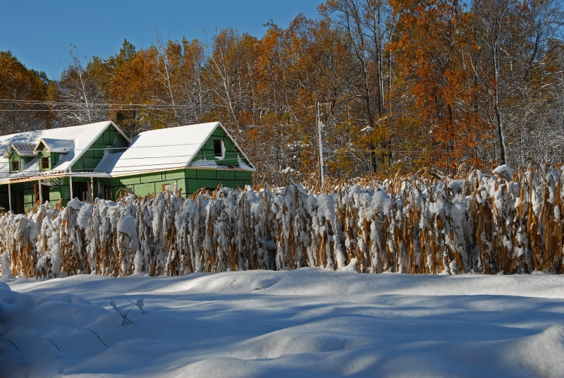 Early Snow On Corn Fields