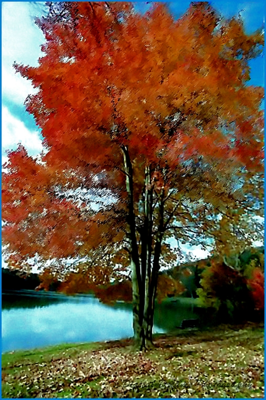 """beauty Of The Sugar Maple"""