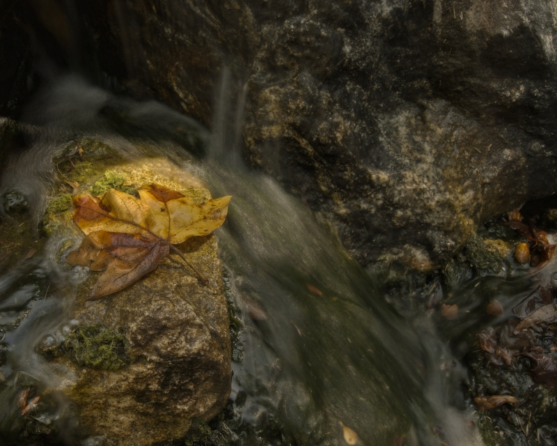 Fall Leaf On A Rock