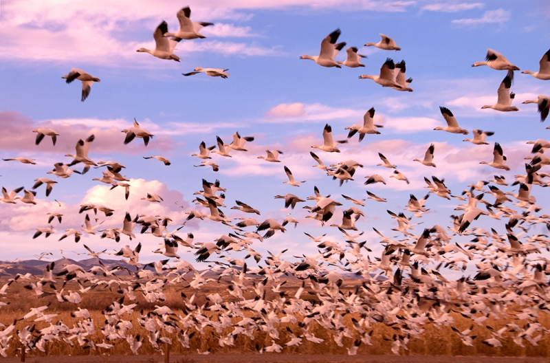 Wildlife Landscape At Bosque Del Apache