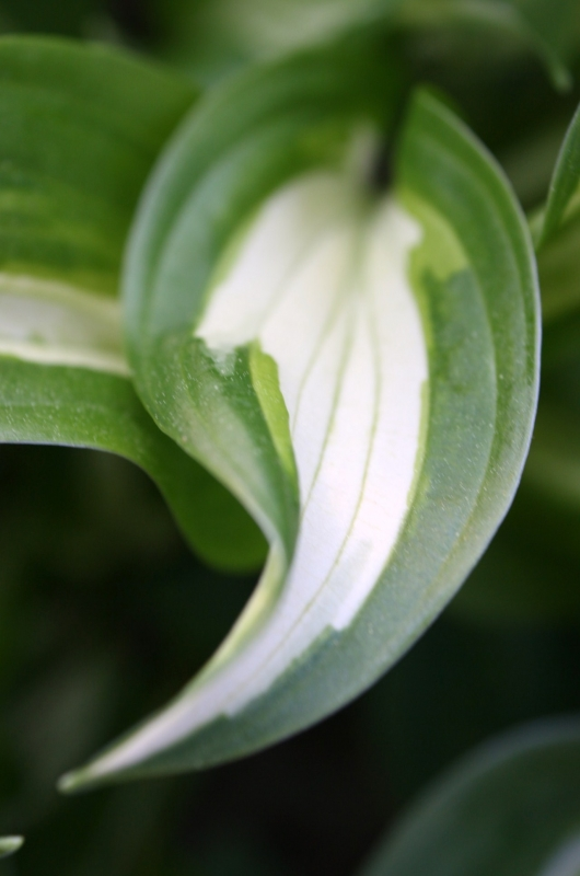 Hostas Have It