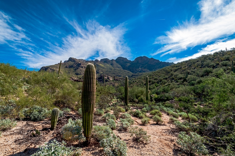 The Santa Catalina Mountains