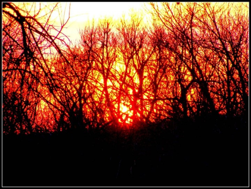 Sunset Within The Trees
