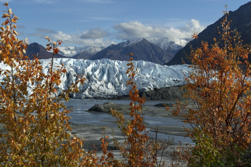 Fall Colors At Matanuska Glacier
